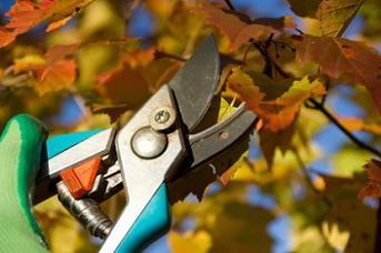 fall-pruning-lg